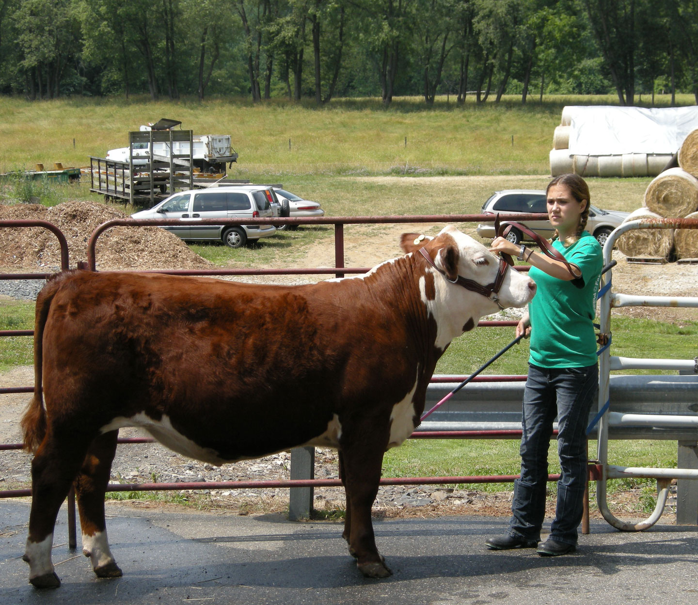 4H program at Fox Chase Farm